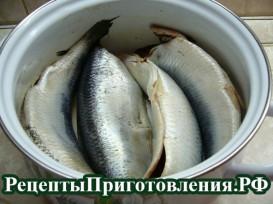 Рецепт соления селедки в домашних условиях в рассоле